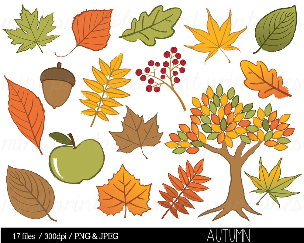 Autumn leaf tree clip. Acorn clipart gland