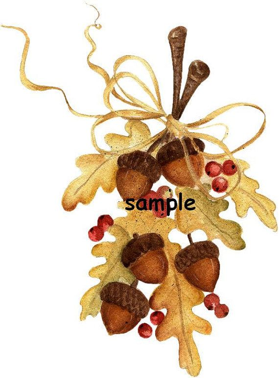 Acorn clipart gland. Acorns leaves tied with