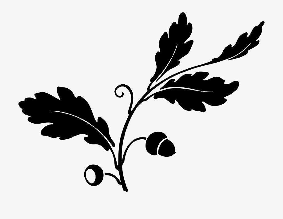 Acorn clipart leaf. And acorns big image