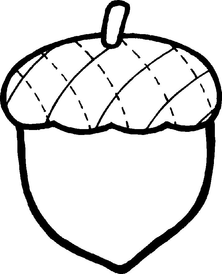 acorn clipart line art