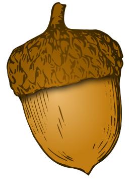 Acorn clipart nut. Fingerprint drawings pinterest clip
