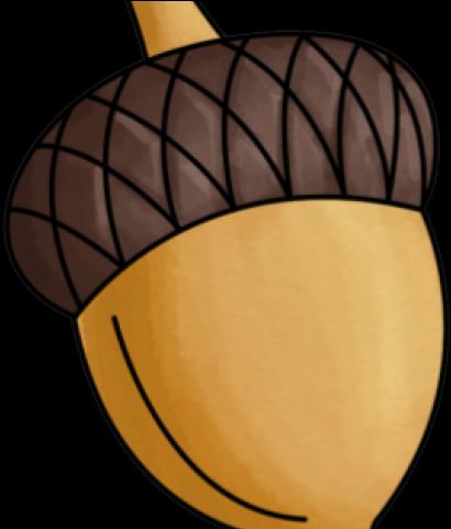 Hd transparent png image. Acorn clipart nut