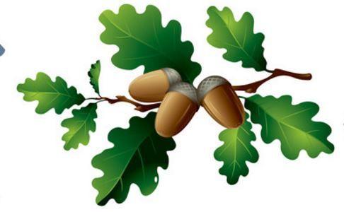Leaves and acorns art. Acorn clipart oak leave