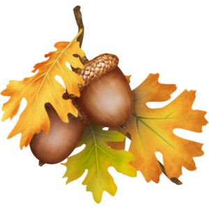 Harvest clipart oak leaves. Fall and acorns sprig