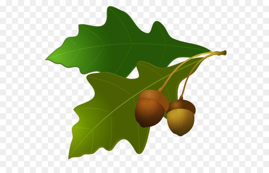 Leaf clip art png. Acorn clipart oak leave