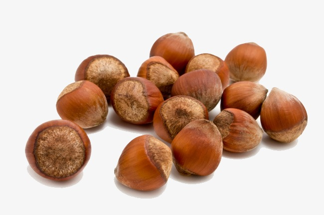 Acorn clipart pile. Shell dried fruit png