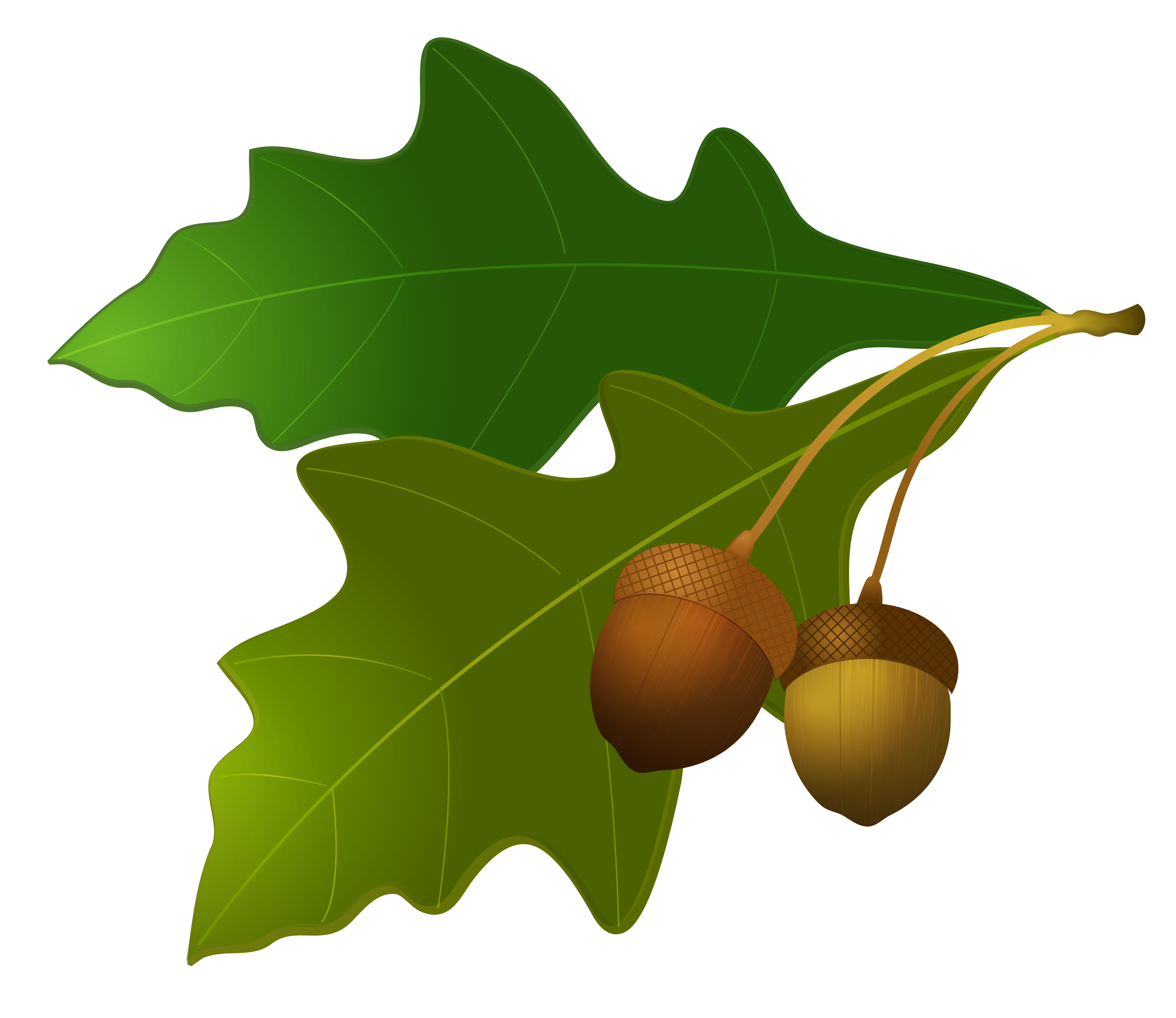 Png imge free picture. Harvest clipart acorn