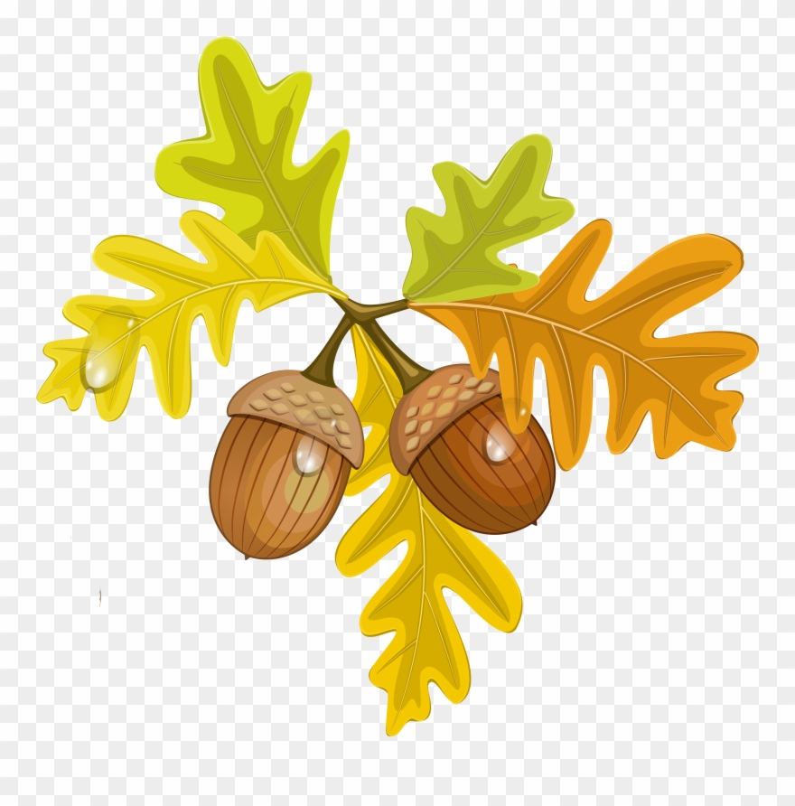 Acorn clipart single. Transparent fall leaves with