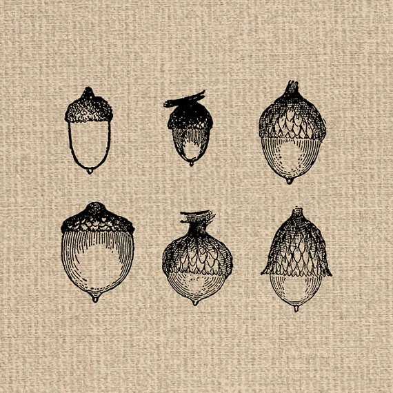 Acorn clipart single. Printable collection images graphics