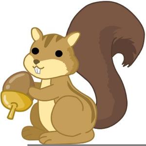 Acorns free images at. Clipart squirrel acorn
