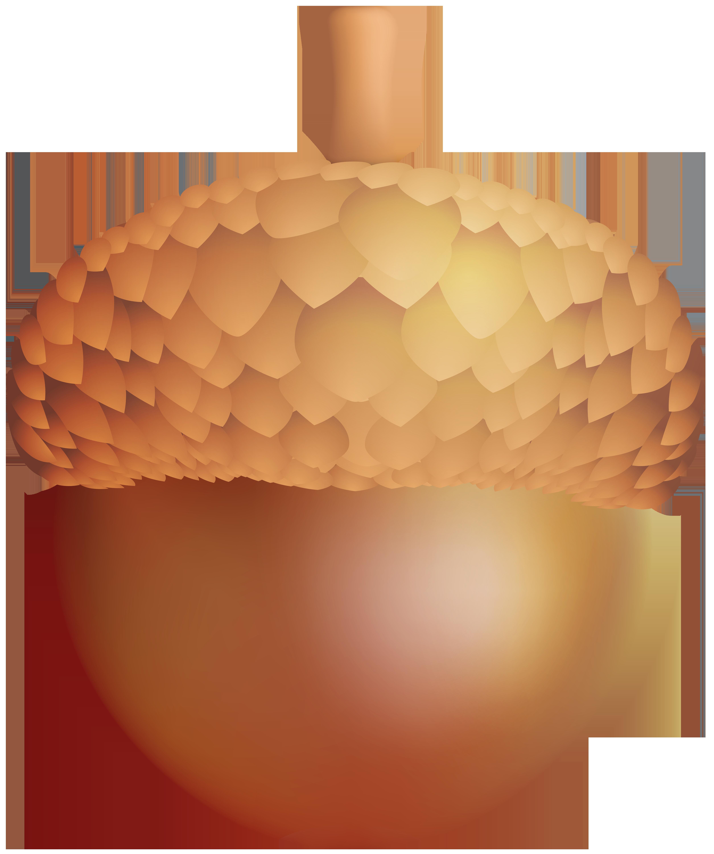 Acorn png clip art. Nut clipart acron