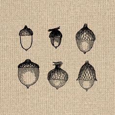 Acorn clipart vintage. Collage sheet acorns digital