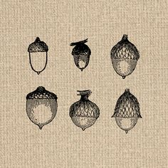 Collage sheet acorns digital. Acorn clipart vintage