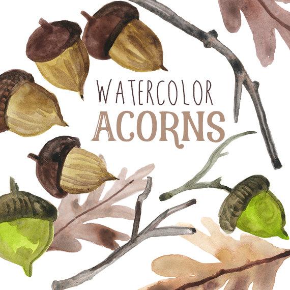 Acorn watercolor
