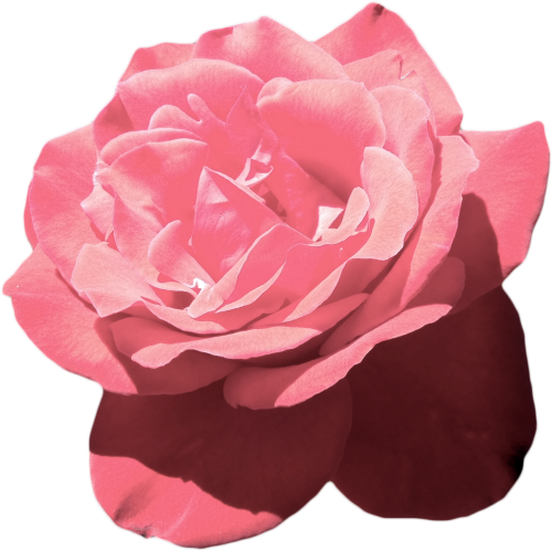Tumblr pink vaporwave. Aesthetic flower png