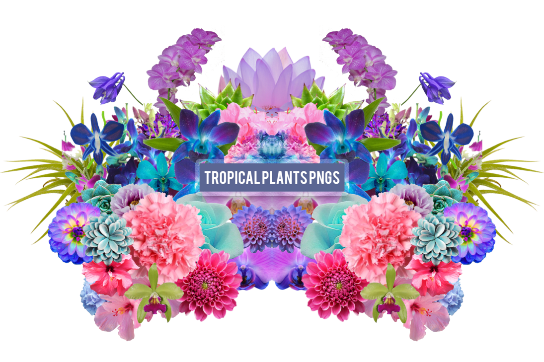 Aesthetic flower png. Tropical plants s by