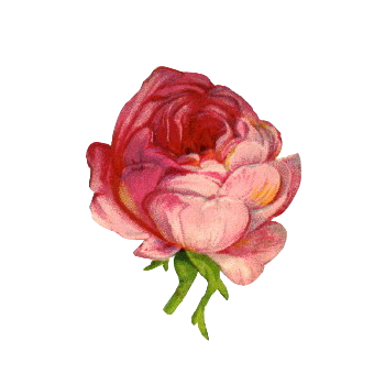 Aesthetic flower png. Cr to owner uploaded