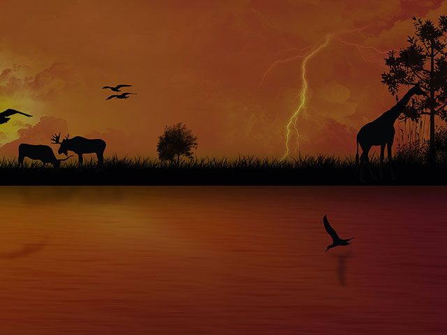 Images art backgrounds wildlife. African clipart background
