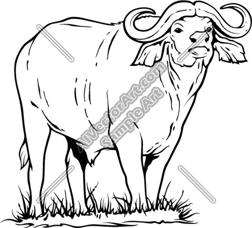 Buffalo at getdrawings com. Africa clipart line drawing