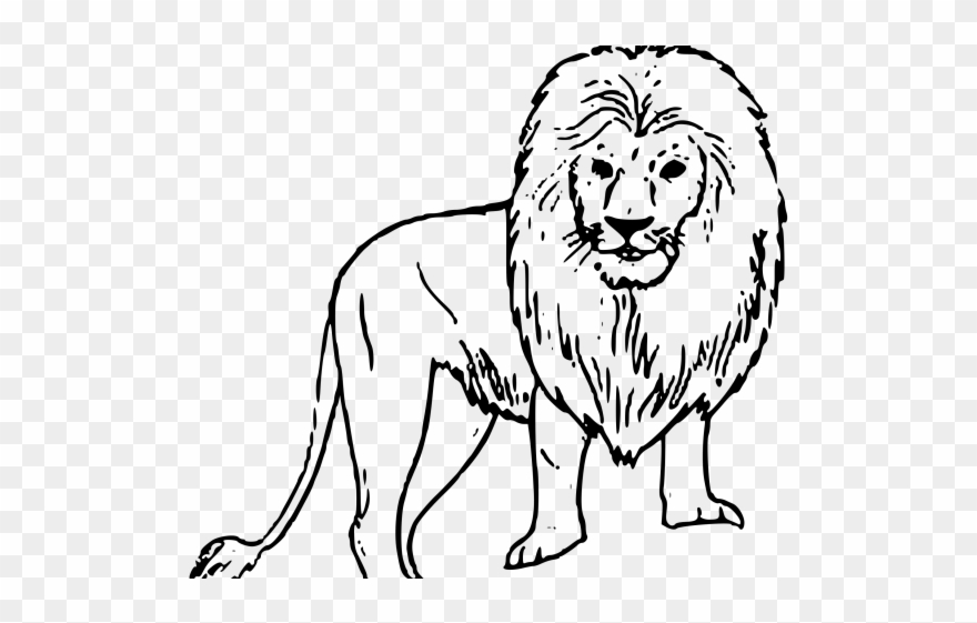 White lion black background. African clipart easy