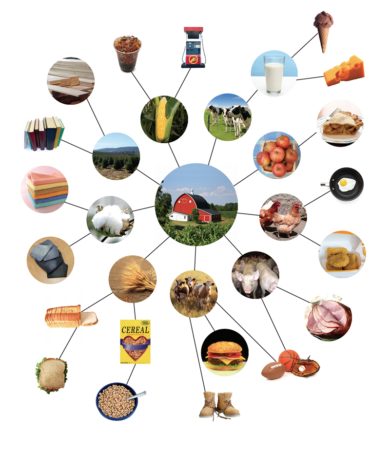 Farm to product wall. Agriculture clipart agricultural production
