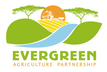 What is evergreen . Agriculture clipart agriculture business