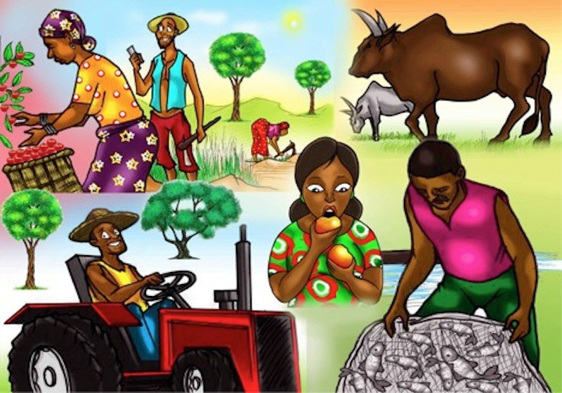 Agriculture clipart agriculture sector. Raising productivity thisdaylive obinna