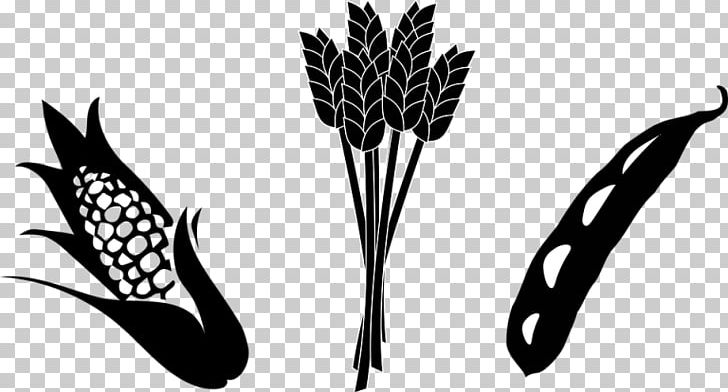 Crop maize soybean png. Agriculture clipart black and white