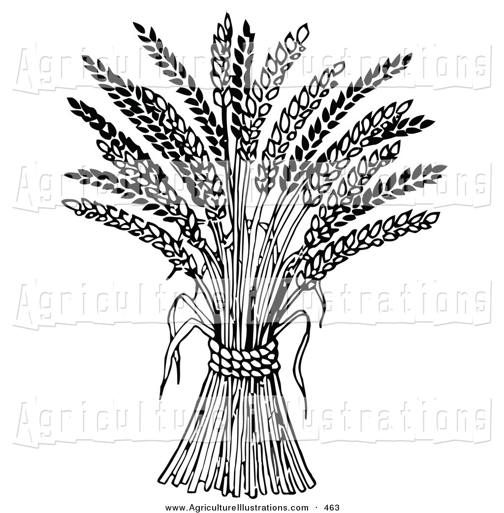 Agriculture clipart clip art. Of a wheat bound