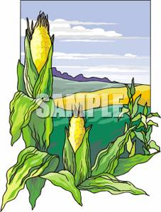 Agriculture clipart corn field. Clip art image fields