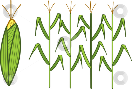 Agriculture clipart corn field. Stock vector