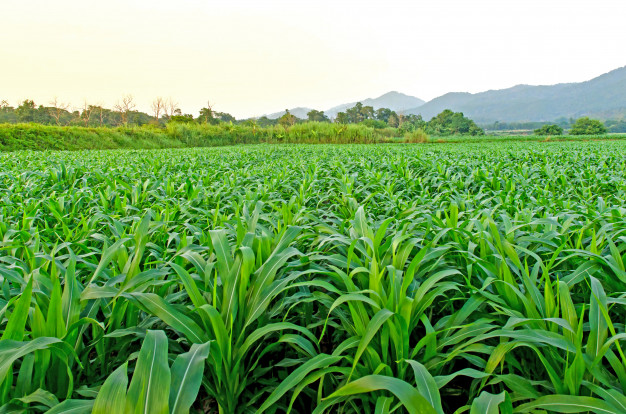 Agriculture clipart corn field. Landscape of and farm