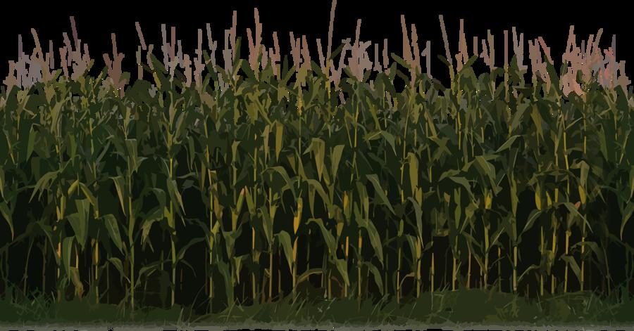 Corn clipart field corn. Farmer cartoon agriculture farm