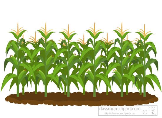 Classroom cornfieldclipartjpg. Agriculture clipart corn field