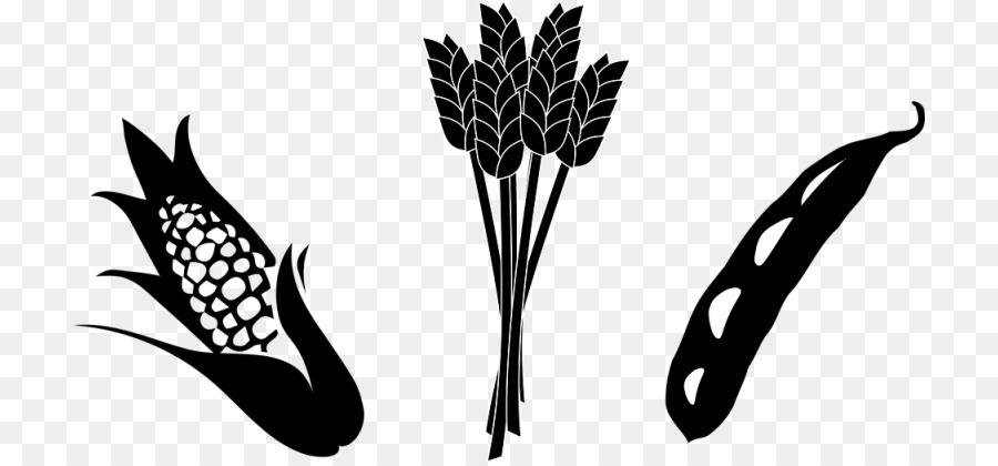Agriculture clipart crop. Maize soybean clip art