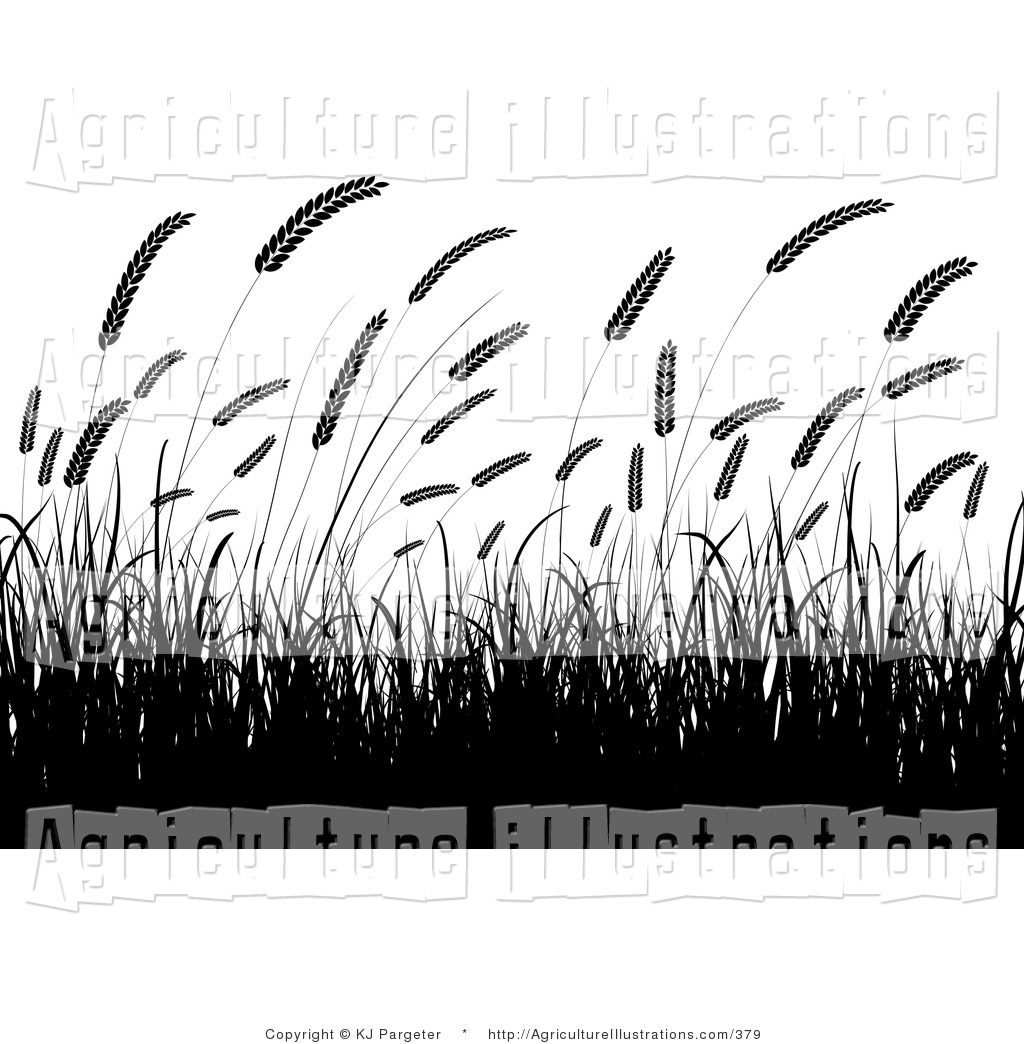 Agriculture clipart crop. Of black silhouetted wheat