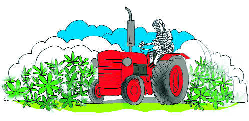 Agriculture clipart cultivation. Of hemp a high