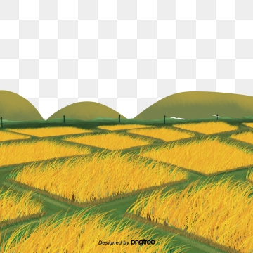 Paddy png vector psd. Land clipart rice field