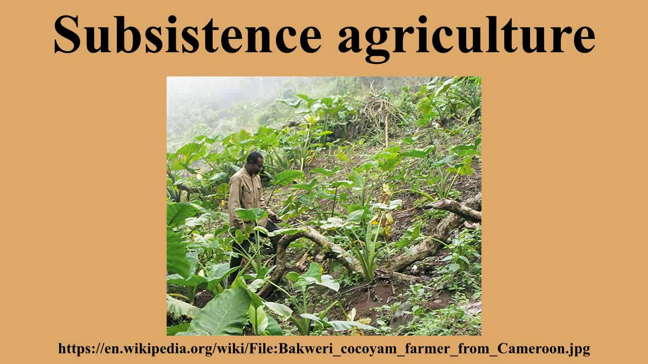 Youtube . Agriculture clipart subsistence agriculture
