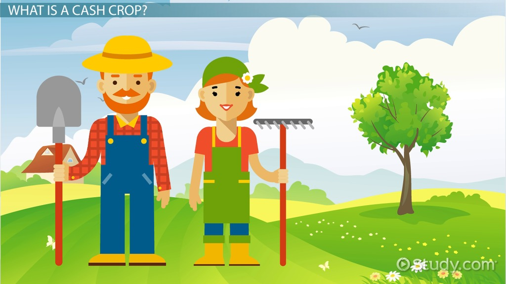 Agriculture clipart subsistence agriculture. Cash crop definition history