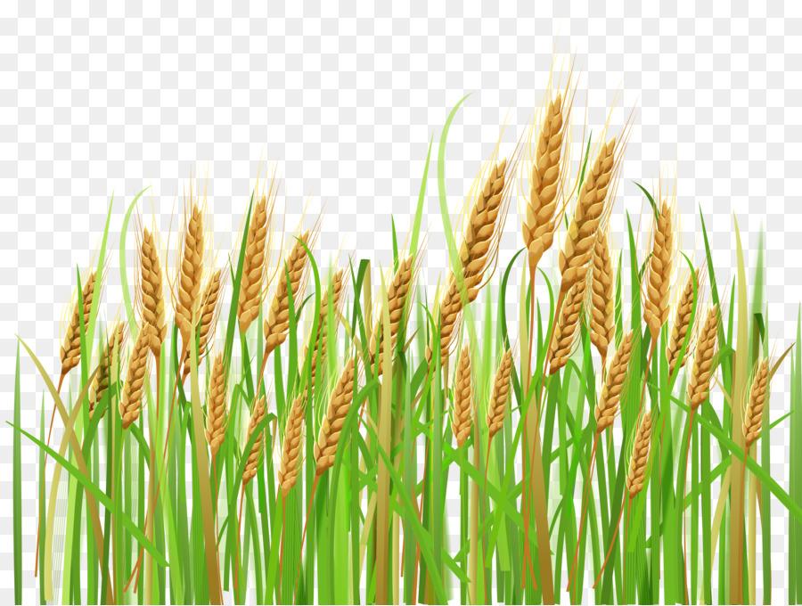 Cartoon grass plant transparent. Wheat clipart wheat crop