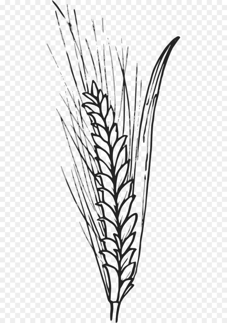 Family tree background agriculture. Wheat clipart outline