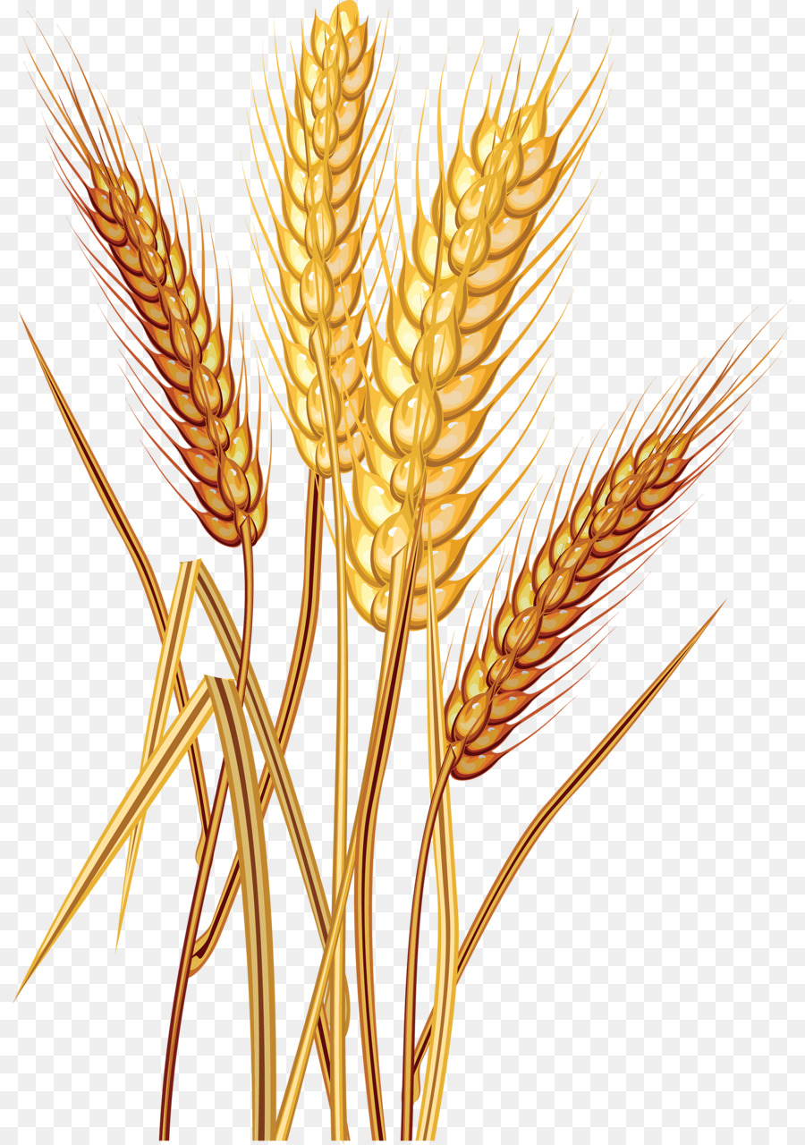 Common stock photography download. Wheat clipart food grain