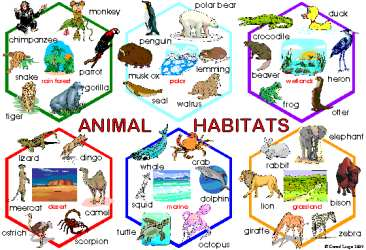 Animals habitats esl resources. Air clipart habitat