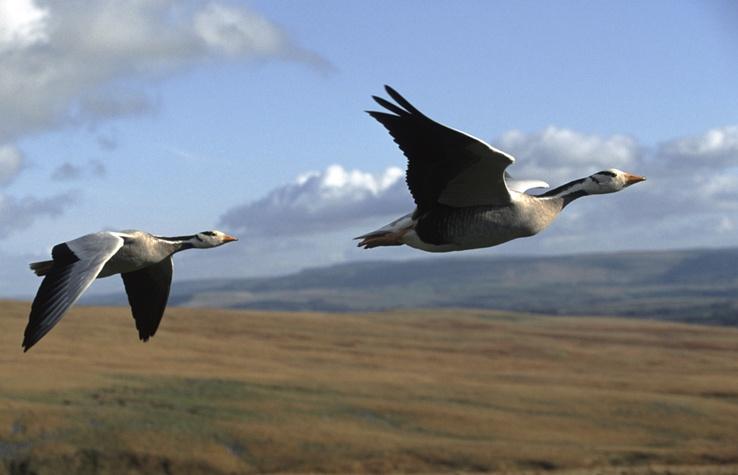 Air clipart habitat.  creatures that live