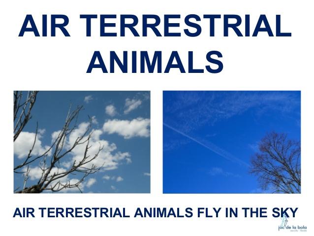 Air clipart habitat. Where do animals live