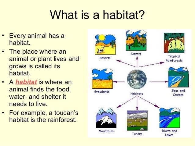 Habitats for plants and. Air clipart habitat