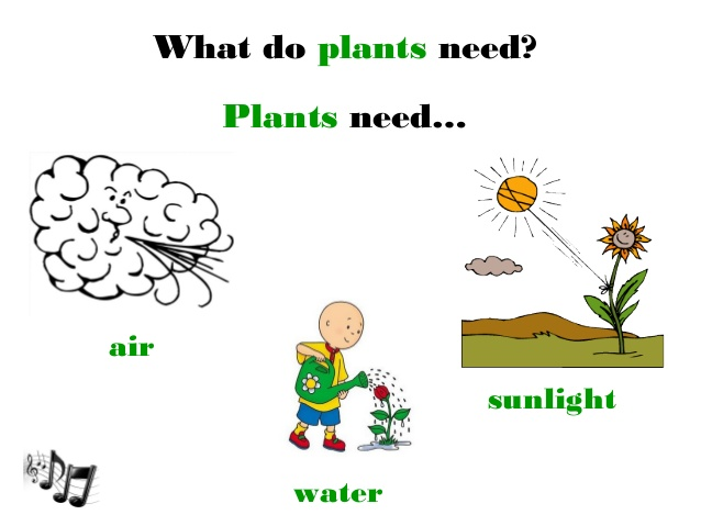 Air clipart sunlight. Unit plants need water