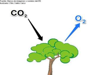 Claretscience of plants need. Air clipart uses air