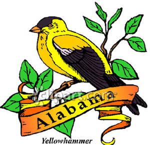 State bird of the. Alabama clipart illustration